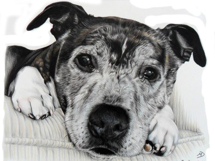 I specialise in producing meticulously hand drawn Pet and Children's portraits to order. by PembsPortraits on Etsy