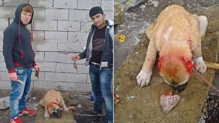 Sign: Justice for Dog with Ears Cut Off for Selfies..