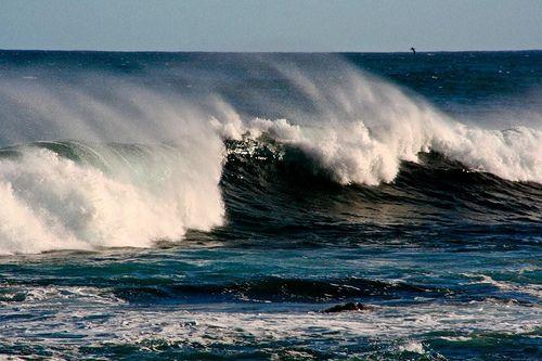 Do Shark Sightings Affect Australia's Tourism Industry