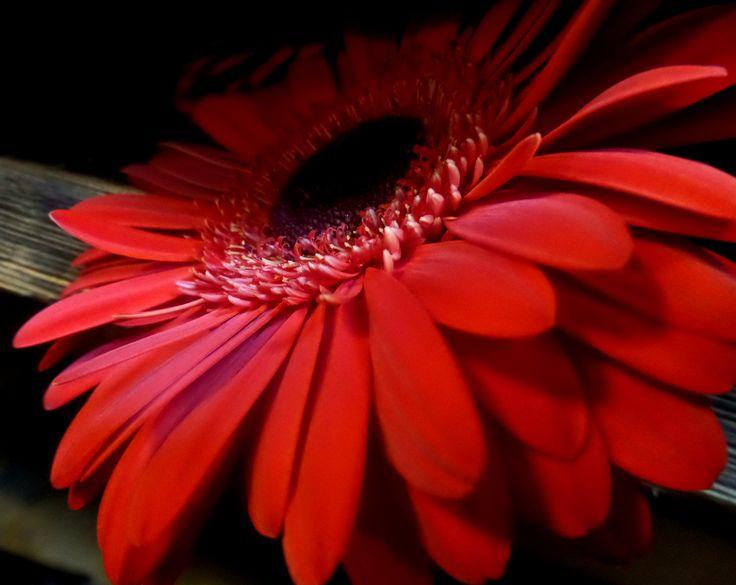 Virág. Flower.