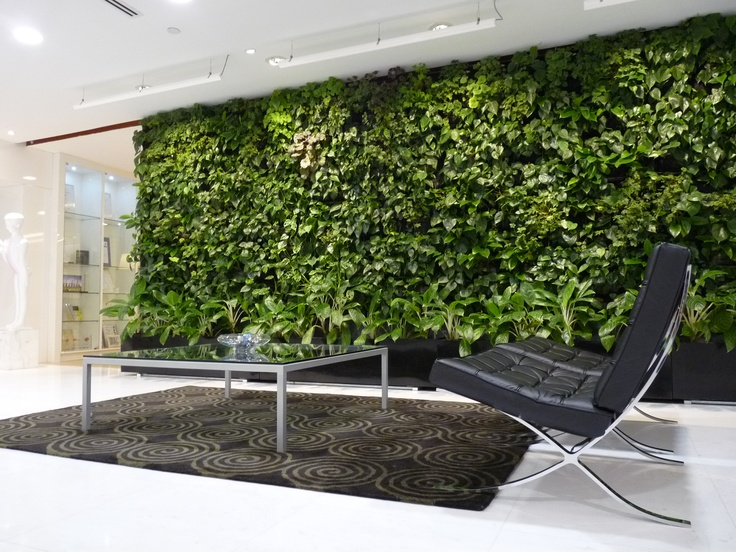 Indoor Greenwall at DCA Architects, Singapore.Thinnest most lasting Greenwalls in Singapore. More than 4,000 sq meters done
