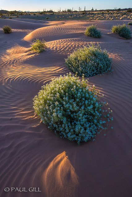 Beautiful Desert of Arizona