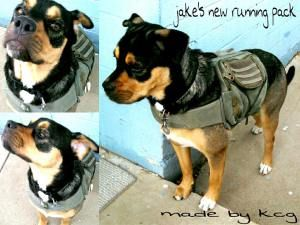 Upcycle: how to make a pack for you dog using an old backpack.