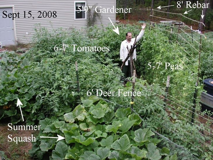 13 Best Images About Permaculture Lasagne Gardening
