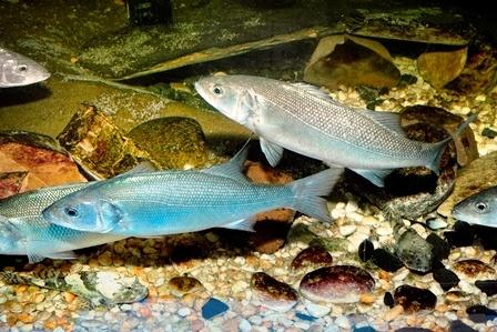 MuZeeaquarium Delfzijl, niet alleen een zeeaquarium maar daarnaast nog 5 verschillende collecties van de maritieme geschiedenis van Delfzlijl tot schelpen in allerlei kleuren en vormen.