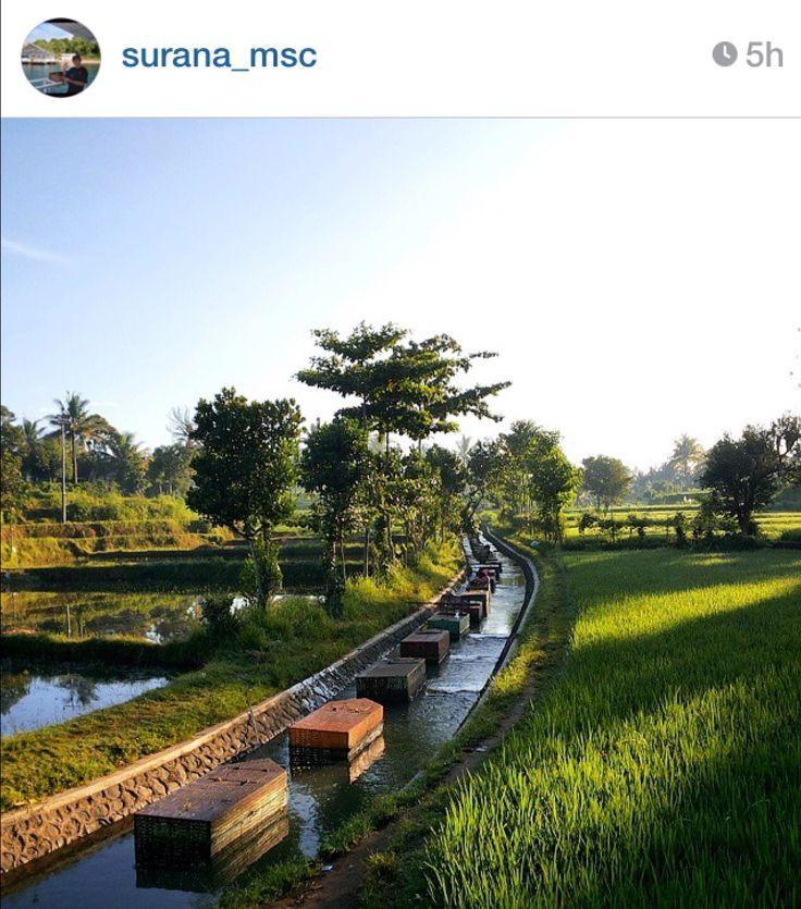 Karamba Pringgarata kondisi 17 Januari 2015