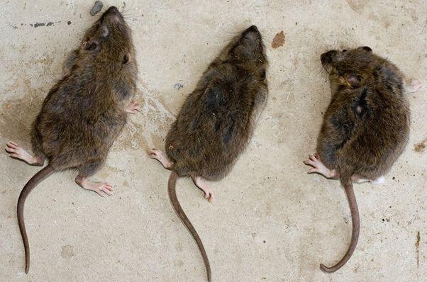 Včera ešte usmievavé potkany vz. Quo vadis, Europa? (Svet financií očami komentátora)