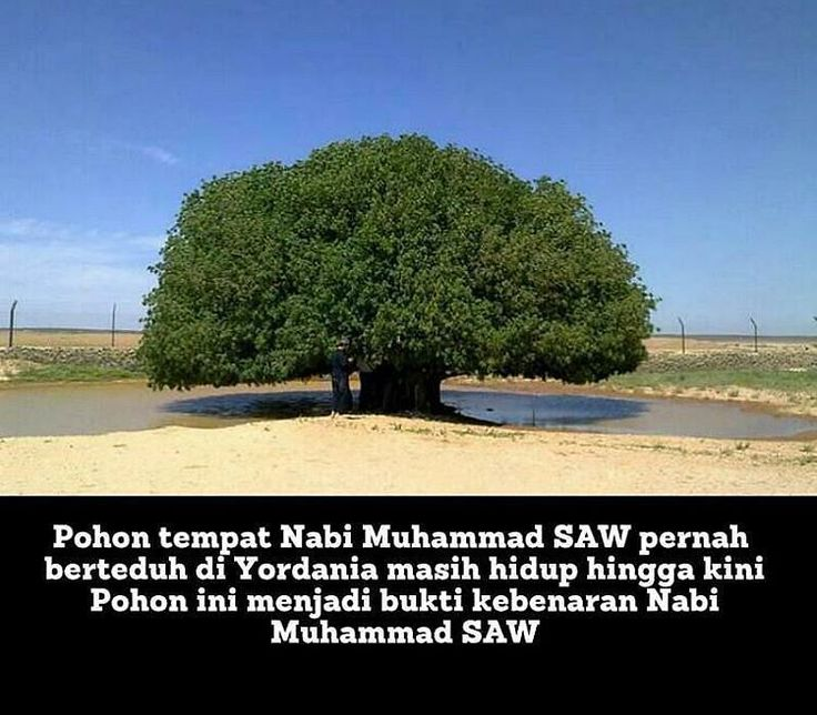 """Ada sebuah pohon yang pernah menaungi Rasulullah SAW dari terik matahari hingga kini masih hidup subur di tengah padang gersang di Yordania. Sebab itu pohon ini dijuluki """"The Only Living Sahabi"""" atau """"Satu-satunya sahabat Nabi yang masih hidup"""". Padahal di sekitarnya tidak ada pohon lain. Pohon Nabi ini bahkan sudah berumur ribuan tahun namun anehnya pohon ini masih hidup sampai sekarang. Pohon ini menjadi bukti kenabian Nabi Muhammad SAW. Dan sepertinya pohon ini sengaja dibiarkan hidup…"""