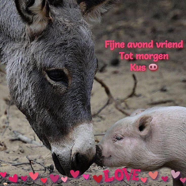 Pin by Cheryl Finnerty Allison on i Love Animals Mini