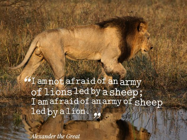 """I am not afraid of an army of lions led by a sheep; I am afraid of an army of sheep led by a lion."" Alexander the Great quote on leadership #quotes #leadership"