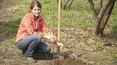 Plantarea pomilor fructiferi necesită mare atenție și mai ales informare în prealabil astfel încât fiecare puiet pe care l-ați pus în pământ să se prindă și să devină un pom sănătos �