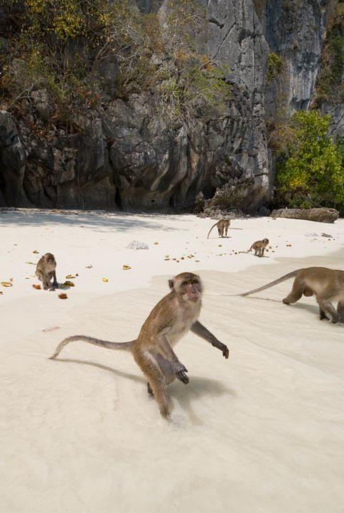 Apor i Thailand