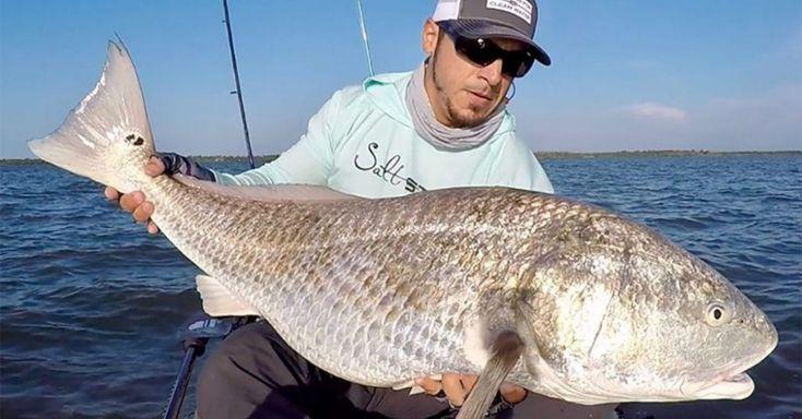 How to catch big redfish black drum snook on light