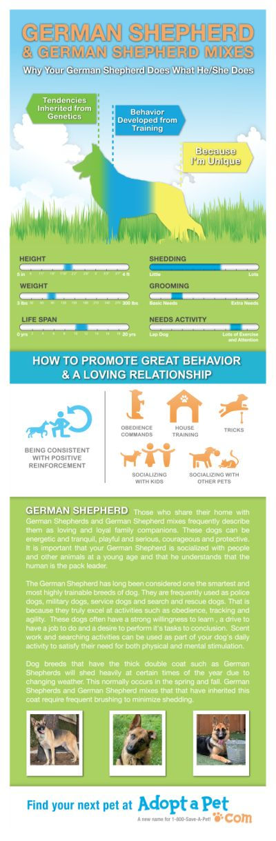 Everything you ever wanted to know about German Shepherd and German Shepherd mixes. www.adoptapet.com