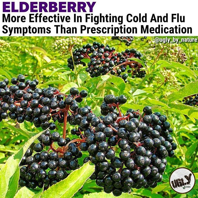 Elderberry has been used in folk medicine for centuries to treat influenza colds and sinusitis and has been reported to have antiviral activity against influenza and herpes simplex. We investigated the efficacy and safety of oral elderberry syrup for treating influenza A and B infections.  Sixty patients (aged 18-54 years) suffering from influenza-like symptoms for 48 h or less were enrolled in this randomized double-blind placebo-controlled study during the influenza season of 1999-2000 in…