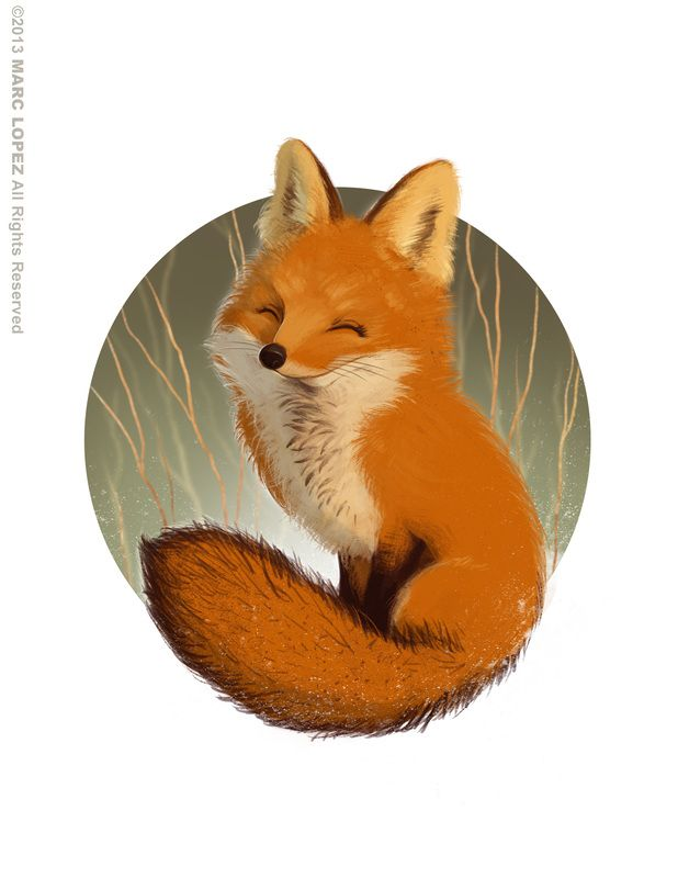 Smiling Fox by marclopez ★ Find more at http://www.pinterest.com/competing/