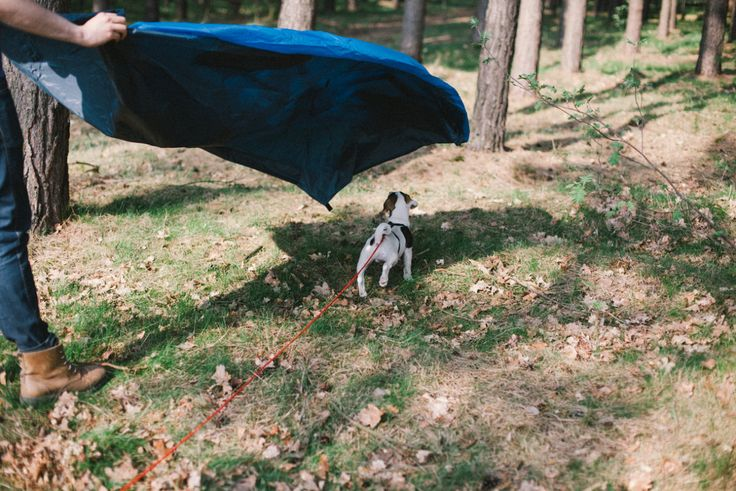 Urban Tenting Tenting in the city forest in Berlin-Königsheide,...