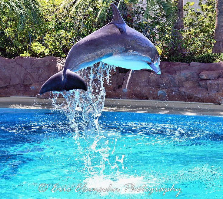 1428 Best Nevada Images On Pinterest Dolphin Habitat Vacation Places And Nevada