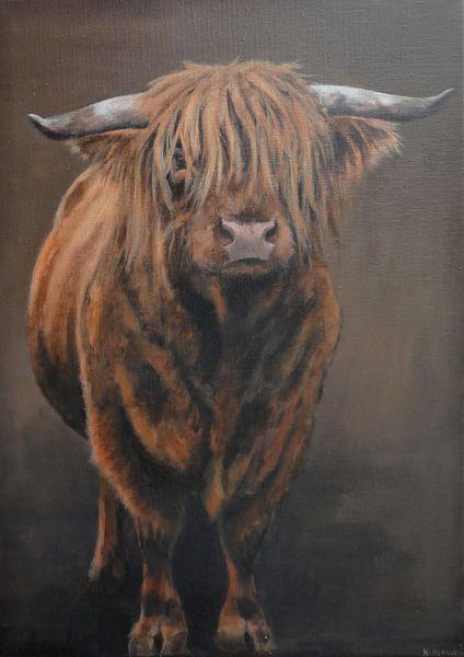 Schotse Hooglander, 70 x 50 cm, acrylverf op linnen