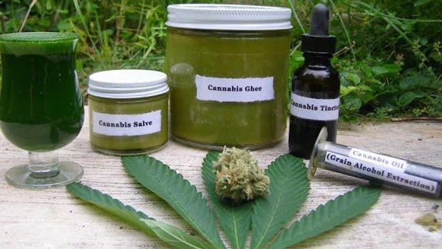 TERRA REAL TIME : La cura proibita, l'olio di Canapa contro le cellule cancerose!