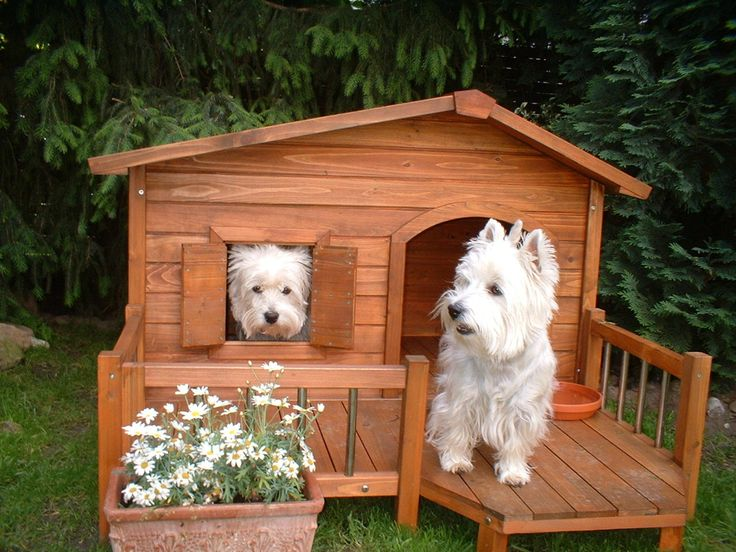 Westie looks for guest to arrive. #dogs #pets #WestHighlandWhiteTerriers facebook.com/sodoggonefunny