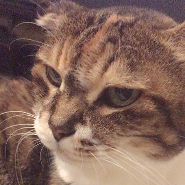 #猫 #愛猫 #老猫 #19歳 #ハッピーバースデー #長生きしてね
