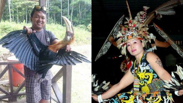 Pria Ini Jadi Bulan-bulanan Netizen Karena MengKonsumsi 'Panglima Burung' Suku Dayak http://ift.tt/2nesH0x  Heboh ! Pria Ini Jadi Bulan-bulanan Netizen Karena MengKonsumsi 'Panglima Burung' Suku Dayak. Kenapa demikian ? Beini ceritanya :  Publik dihebohkan dengan aksi penangkapan dan pembunuhan hewan langka oleh kelakuan seorang pria di jejaring sosial Instagram. Di akun Instagram miliknya @raffi_11rdr pria itu mengunggah foto sedang memegang seekor burung langka bernama Enggang berbulu…