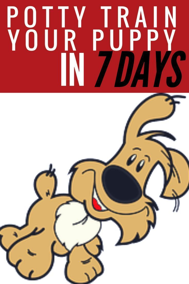 If you're struggling to housebreak your dog or puppy, check out this post on potty training a dog in 7 Days.