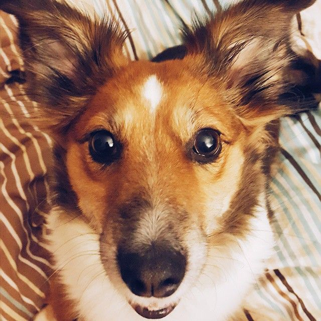 Wierna #przyjaciółka - faithful lovely friend #plamka means spot  #warsaw #vscopoland #doggy #vscodog #igersdog #attorneys #lawyers #polishdog #mypet #ilovemypet #petlover #dogslover  #dogs #mydog #ilovemypuppy #ilovemydog #instapet #psiunia #pieswwarszawie #pies #instapies #piesek #sunia #słodziak #warszawa #nicedog
