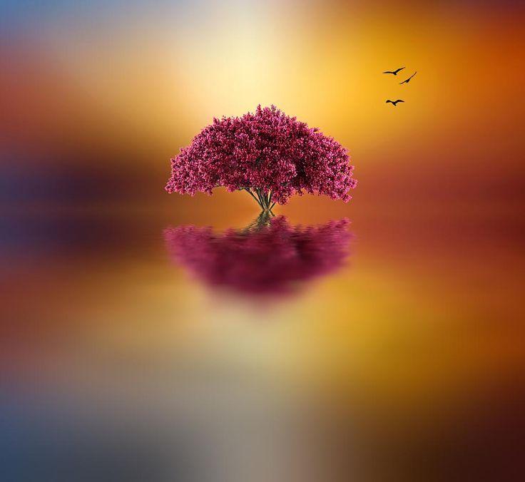 Garden Gnom 2 #j9 by Leif Sohlman   Flowers photography