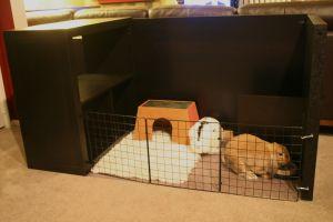 modern bunny house