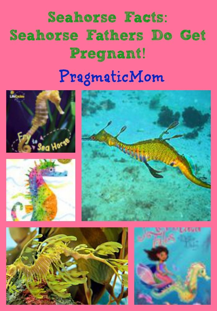 Seahorse Facts: Seahorse Fathers Do Get Pregnant! | The ...