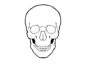 Skull Drawings Drawings Ofskull How To Draw Simple