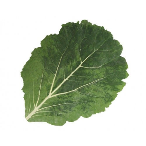 Green Leaf Placemat Cabbage Leaves Plant Leaves Green