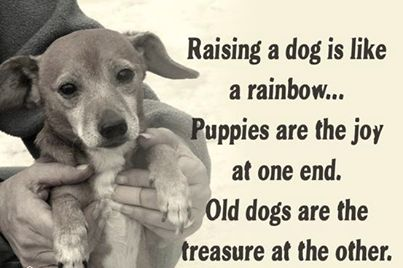 Pets are forever <3