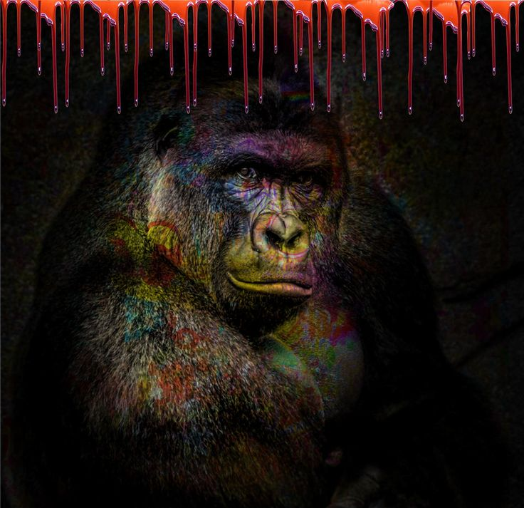 """""""Harambe"""" Plexis from 80 x 80 to 120 x 120 cm available on www.Chams-Art.com"""