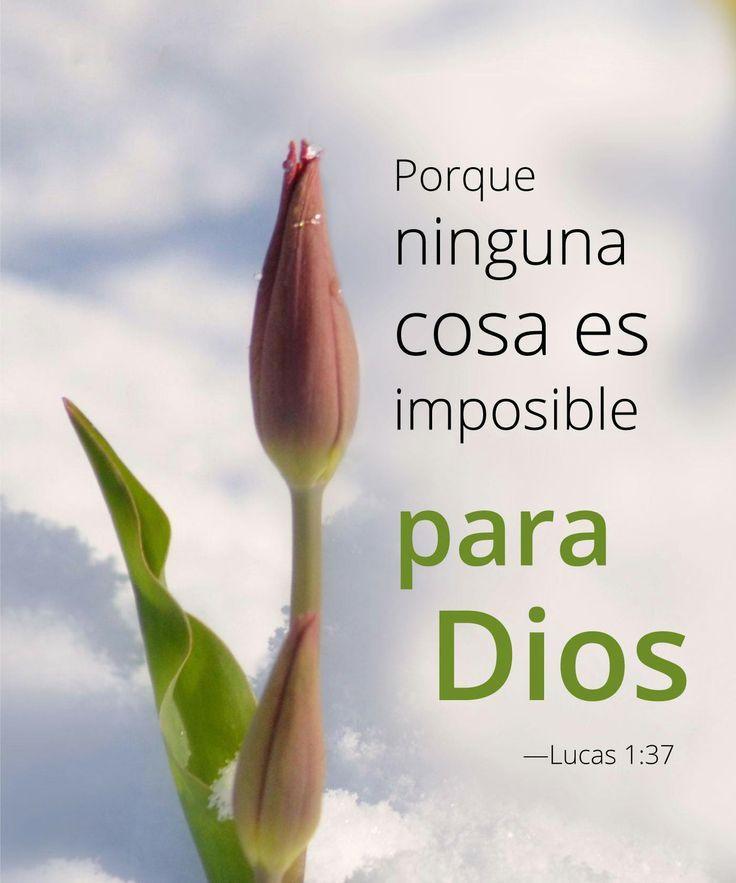 Lucas 1-37 pensamiento del dia