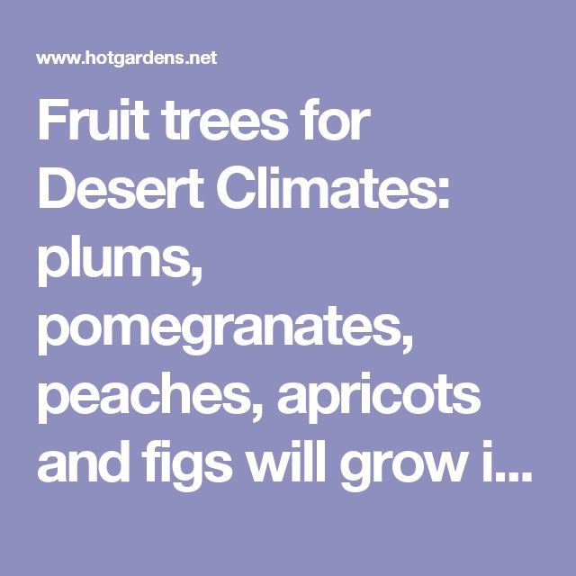 Fruit trees for Desert Climates: plums, pomegranates, peaches, apricots and figs will grow in the high deserts