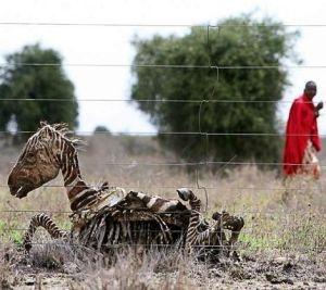 African Hardships