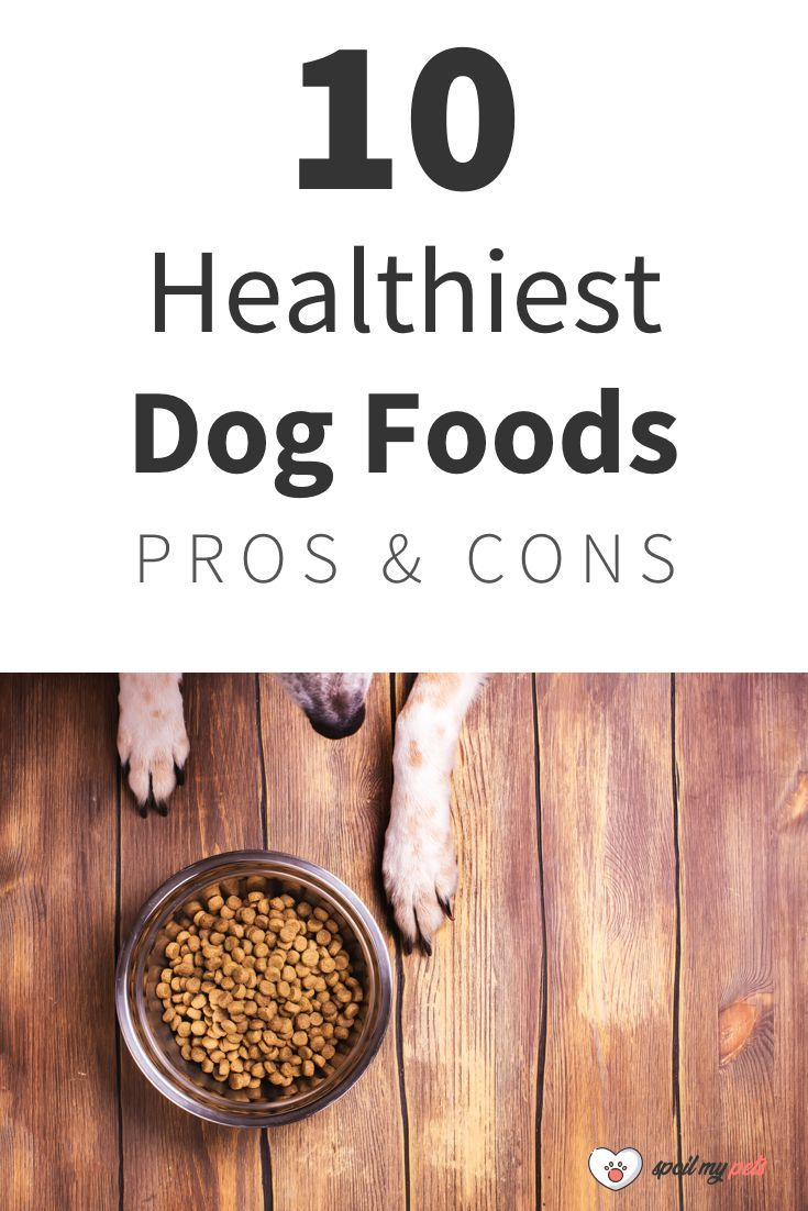 10 Best Dog Foods Pros Cons Healthy Dog Food Recipes Dog Food Recipes Best Dog Food