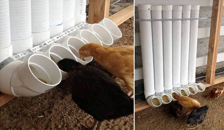 Build your own chicken feeders out of PVC pipe