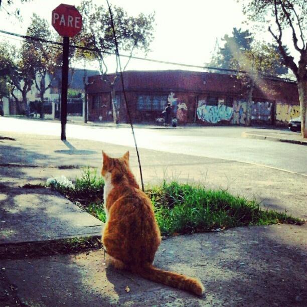 #Cat #esperando #stop #santiago #sanbernardo #life