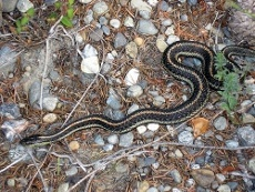Providing A Garden Snake Habitat – How To Attract Snakes In A Garden....awww this article makes me want a little garter snake in my garden :)