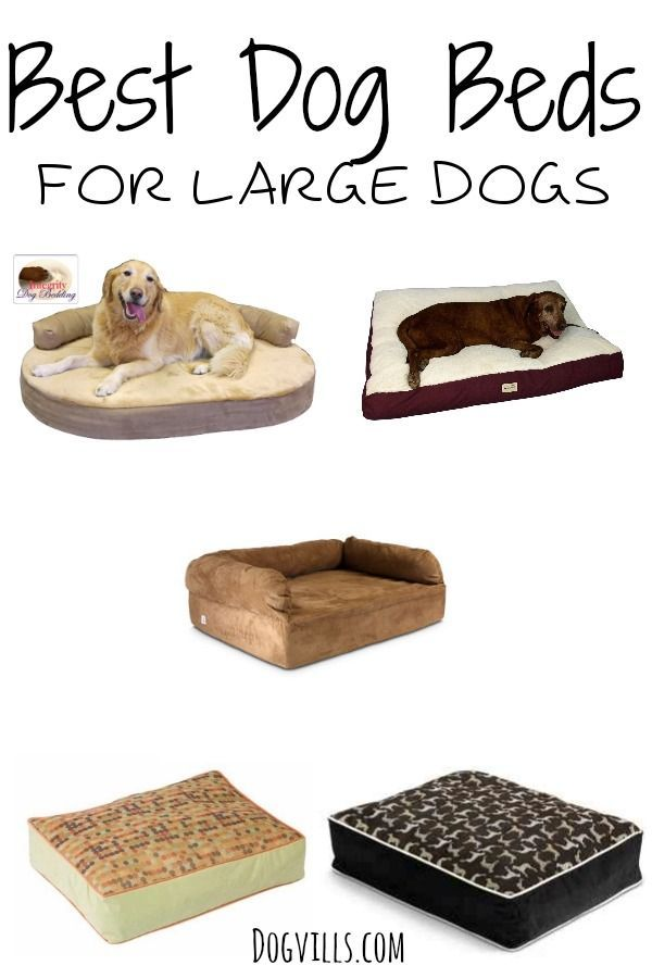 Best  Large Dogs Beds: There is a common misconception that a large breed dog won't want to be a lap dog.