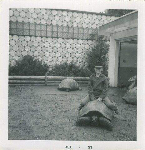 From the Reptile Gardens' Photo Gallery. Taken in the Summer of 1959.