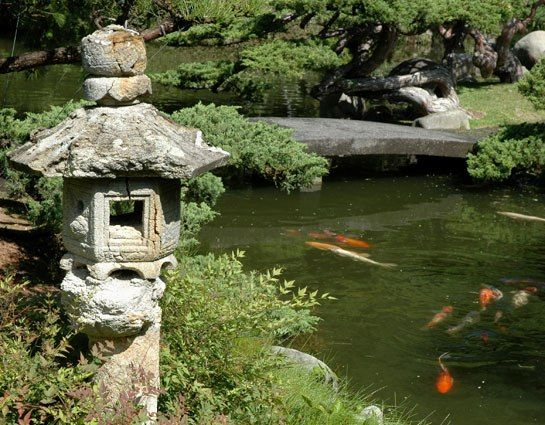 31 best images about koi pond on pinterest decks for Koi ponds and gardens