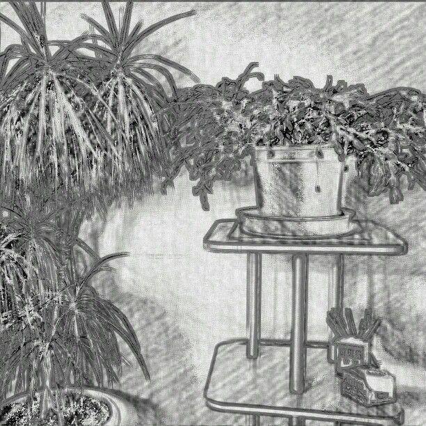 Flowers b&w