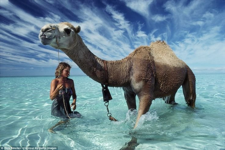 TRACKS - Robyn Davidson with Bub: Of all the camels Bub was the one who seemed to be the most delighted by the water even though he couldn't drink it. He treated water as if it were a new found toy, splashing around like a toddler. If Robyn was in the water Bub had to be there too