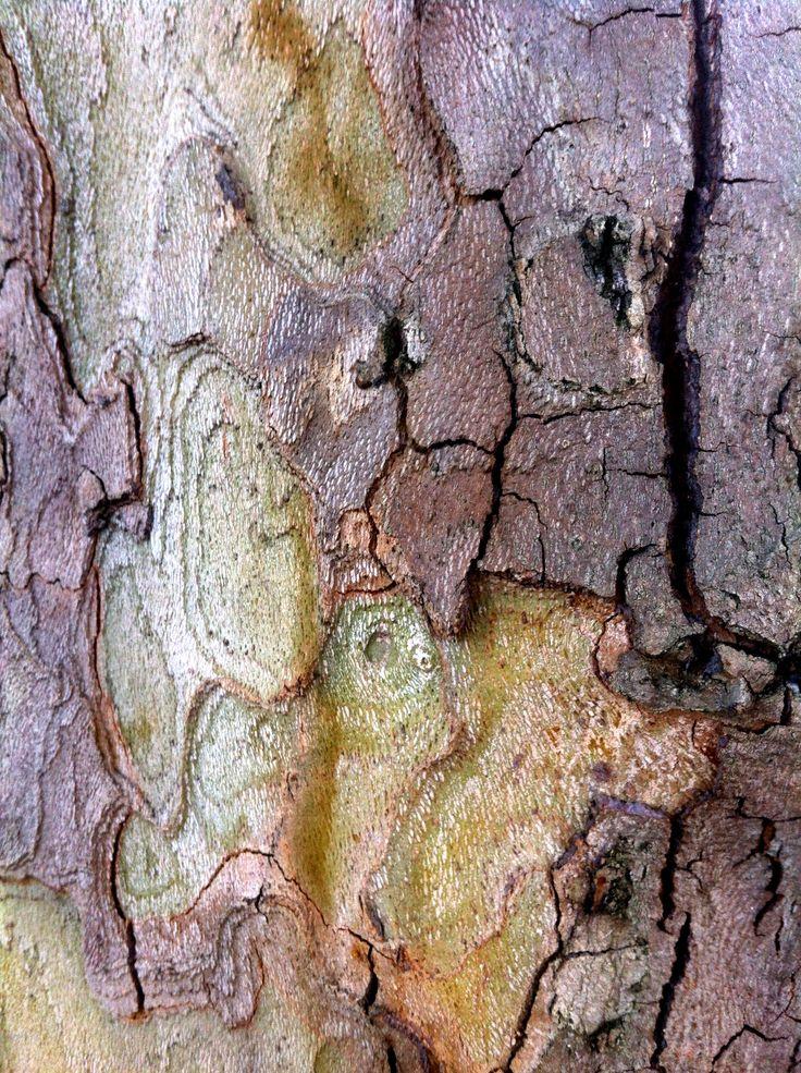 A tree's cardigan