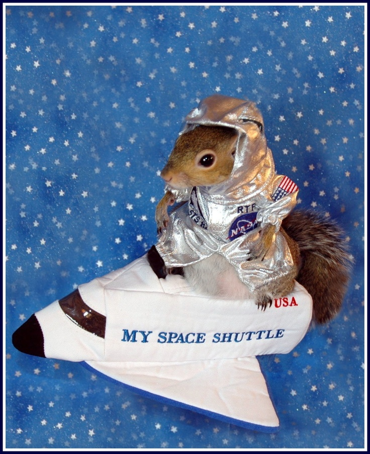 Astronut   Space Shuttle  Fly away into space with Sugar Bush Squirrel, Astronut, as she pilots her way around intergalactic debris and explores new planets in the galaxy.    Squirrel with Astronut Uniform 21.99   (Space Shuttle SOLD OUT) plus shipping and handling